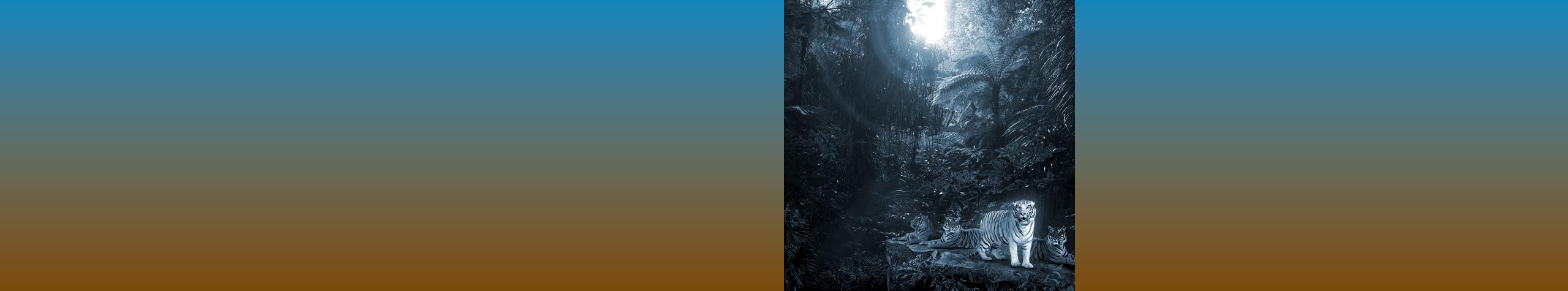 slider_2560pixel_tiger